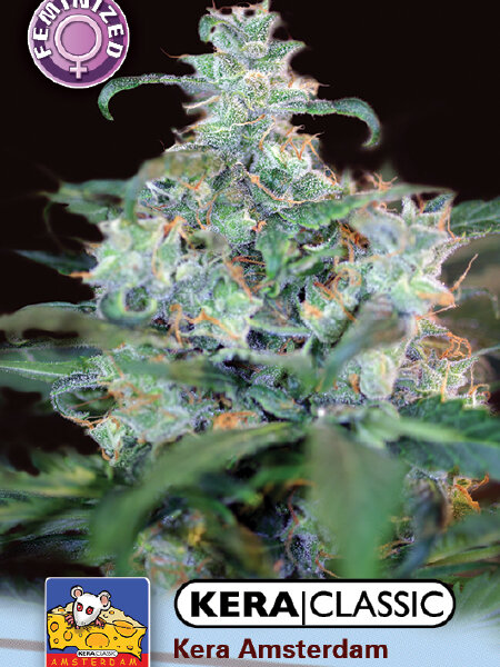 Kera Classic - Crazy Mouse Feminised Cannabis Seeds (was Amsterdam Cheese)