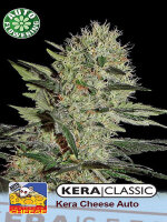 Kera Classic - Cheese Auto Feminised Autoflowering Cannabis Seeds (Was Auto Crazy Mouse)