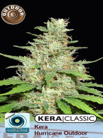 Kera Classic - Hurricane Outdoor Feminied Cannabis Seeds