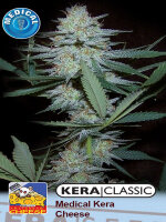 Kera Classic - Medical Crazy Mouse Feminised Cannabis Seeds (Was Medical Cheese)