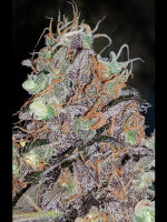 Lineage Genetics - Lavender Feminised Cannabis Seeds
