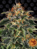 Barney's Farm - Moby Dick Feminised Cannabis Seeds