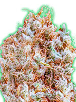 Monster Genetics - Monster Zkittles Feminised Cannabis Seeds