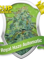 Royal Queen - Auto Royal Haze Automatic Feminised Autoflowering Cannabis Seeds