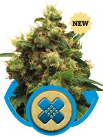 Royal Queen - Painkiller XL Feminised Cannabis Seeds
