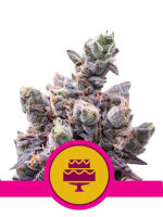 Royal Queen Seeds - Wedding Gelato Feminised Cannabis Seeds