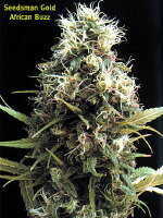 Seedsman - African Buzz Regular Cannabis Seeds