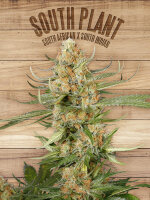 The Plant Organic Seeds - South Plant - Feminised Cannabis Seeds