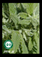 Good House Seeds - Special AK Regular Cannabis Seeds