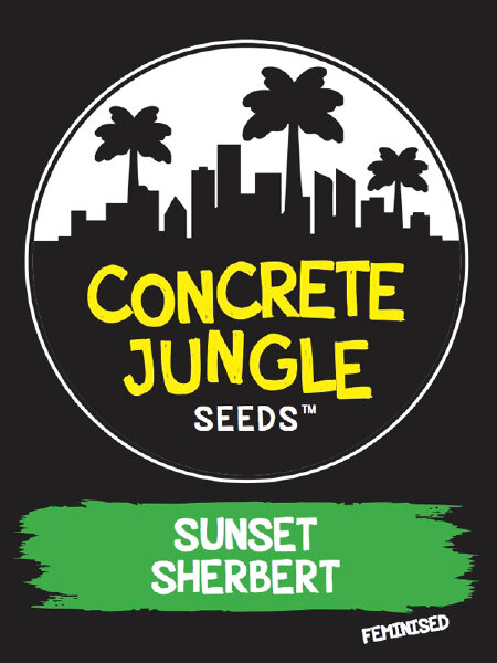 Concrete Jungle - Sunset Sherbert - Feminised Cannabis Seeds