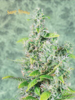 Super Strains - Next of Kin Feminised Cannabis Seeds