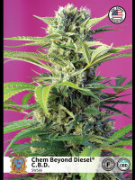 Sweet Seeds - Chem Beyond Diesel CBD Feminised Cannabis Seeds