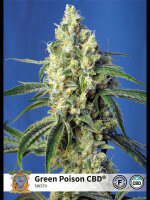 Sweet Seeds - Green Poison CBD Feminised Cannabis Seeds