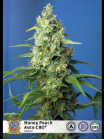 Sweet Seeds - Honey Peach Auto CBD Feminised Autoflowering Cannabis Seeds
