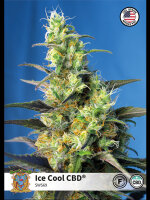Sweet Seeds - Ice Cool CBD Feminised Cannabis Seeds