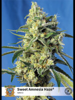 Sweet Seeds - Sweet Amnesia Haze Feminised Cannabis Seeds