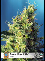 Sweet Seeds - Sweet Pure CBD Feminised Cannabis Seeds