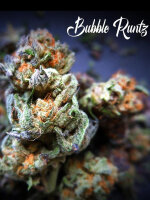 Tastebudz - Bubble Runtz Feminised Cannabis Seeds