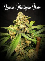 Tastebudz - Lemon Meringue Auto Feminised Autoflowering Cannabis Seeds