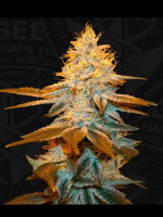 T H Seeds - Strawberry Glue Feminised Cannabis Seeds