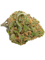 Top Shelf Elite - Gorillagasm Feminised Cannabis Seeds