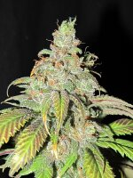 Ultra Genetics - Ultra Grapefruit Regular Cannabis Seeds