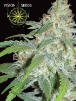 Vision Seeds - Amnesia Feminised Cannabis Seeds