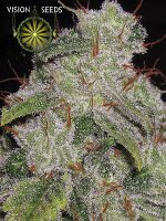 Vision Seeds - Auto Northern Lights Feminised Autoflowering Cannabis Seeds