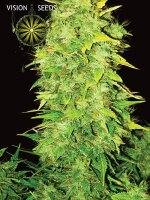 Vision Seeds - Auto White Widow Feminised Autoflowering Cannabis Seeds