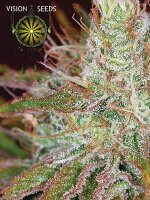 Vision Seeds - Northern Light Feminised Cannabis Seeds