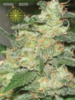 Vision Seeds - Russian Snow Feminised Cannabis Seeds