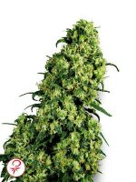 White Label - Skunk #1 Feminised Cannabis Seeds