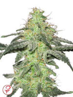 White Label - White Skunk Feminised Cannabis Seeds