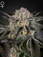 Green House Seeds - Wonder Pie Feminised Cannabis Seeds