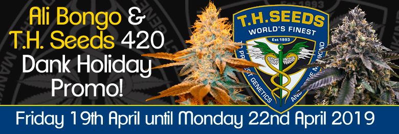 420 Dank Holiday with T.H. Seeds