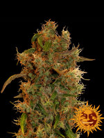 Barneys Farm - 8 Ball Kush Feminised Cannabis Seeds