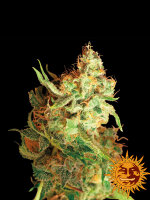 Barneys Farm - Red Dragon Feminised Cannabis Seeds