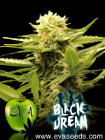 Eva Seeds - Black Dream Feminised Cannabis Seeds