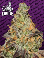 Paradise Seeds Chong's Choice Line - Blue Kush Berry (Indica) Feminised Cannabis Seeds