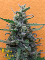 Breaking Buds Seeds - Brownie Auto Feminised Cannabis Seeds