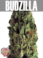 Heavyweight Seeds - Budzilla Feminised Cannabis Seeds