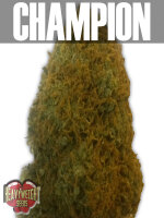 Heavyweight Seeds - Champion Feminised Cannabis Seeds