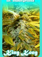 Dr. Underground Seeds - King Kong Feminised Cannabis Seeds
