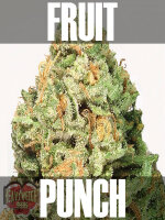 Heavyweight Seeds - Fruit Punch Auto Feminised Autoflowering Cannabis Seeds