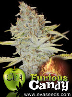 Eva Seeds - Furious Candy Feminised Cannabis Seeds