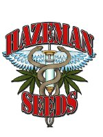 Hazeman Seeds - Black Cheese Regular Cannabis Seeds