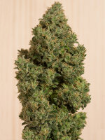 Humboldt Seed Organisation - Blue Dream CBD Feminised Cannabis Seeds