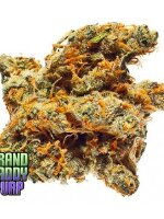 Grand Daddy Purp Seeds - Bay 11 10 Regular Cannabis Seeds