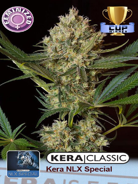 Kera Classic - NLX Special Feminised Cannabis Seeds