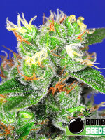 Bomb Seeds - Medi Bomb #2 Feminised Cannabis Seeds